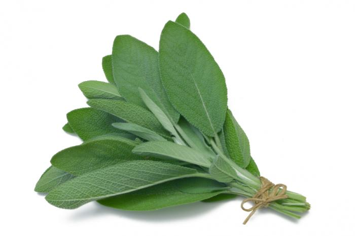Sage Leaves in a bunch
