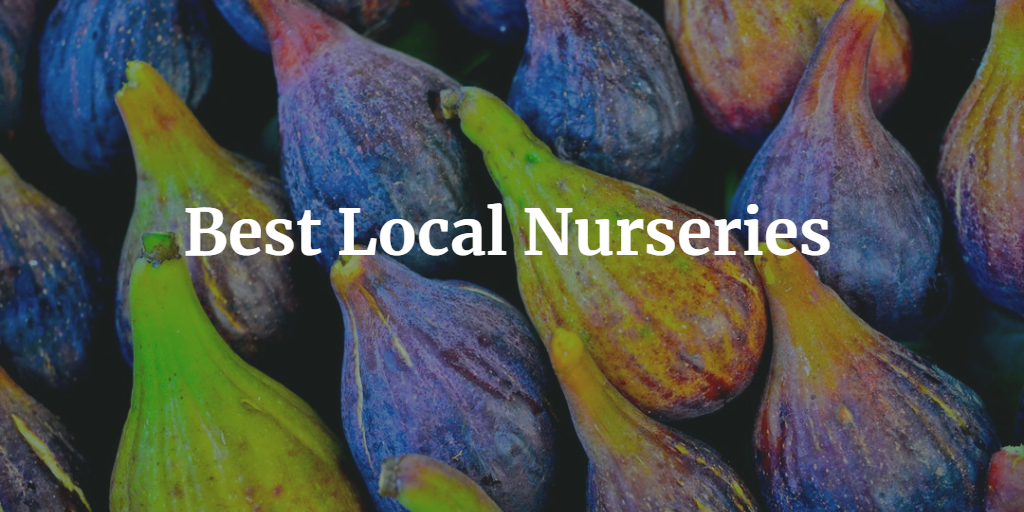 Best Local Nurseries
