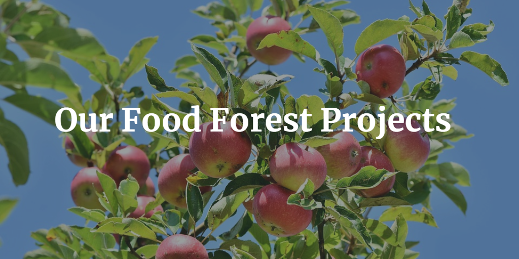 Food Forest Projects in BC