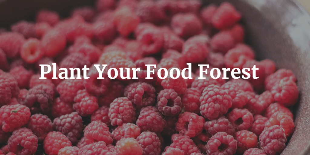 Plant a Food Forest