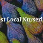 Best Local Nurseries
